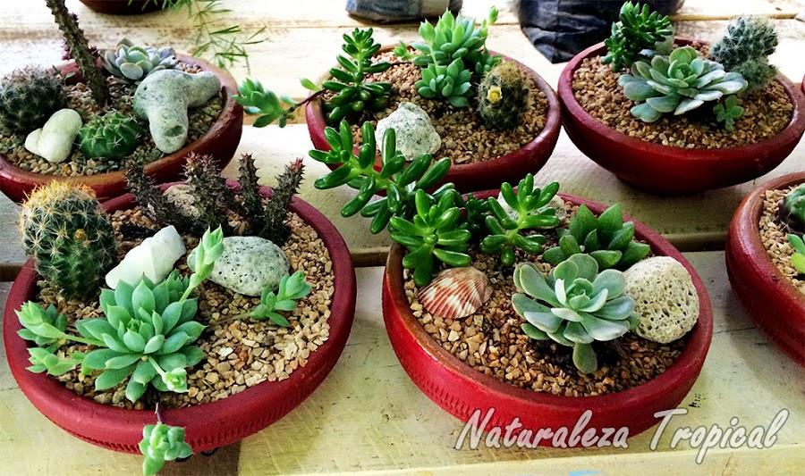 Mini-cultivos de plantas suculentas en macetas de barro