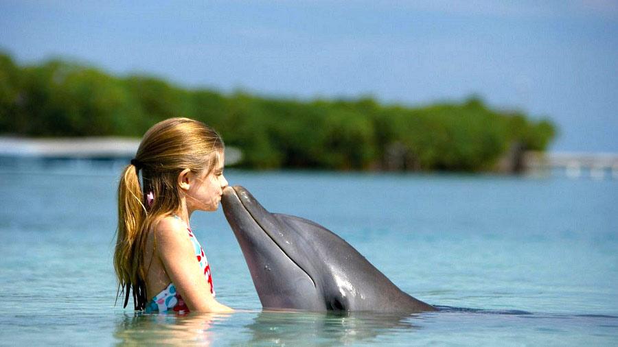 Delfines, ballenas... la magia de los cetáceos