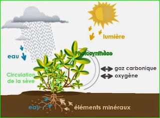 Nutrition minérale des plantes