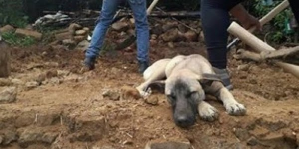 Jacinto, el perro que aún espera a su amo fallecido en el sismo.