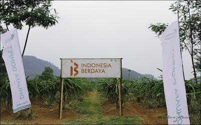 Perkebunan buah naga Dompet Dhuafa Subang