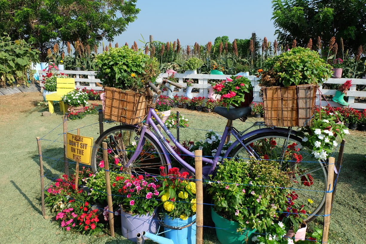 Bike at the Secret Graden within the Sunflower Maze