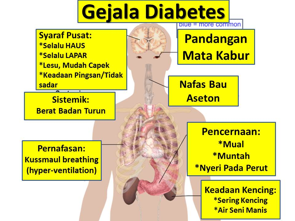mengobati diabetes melitus