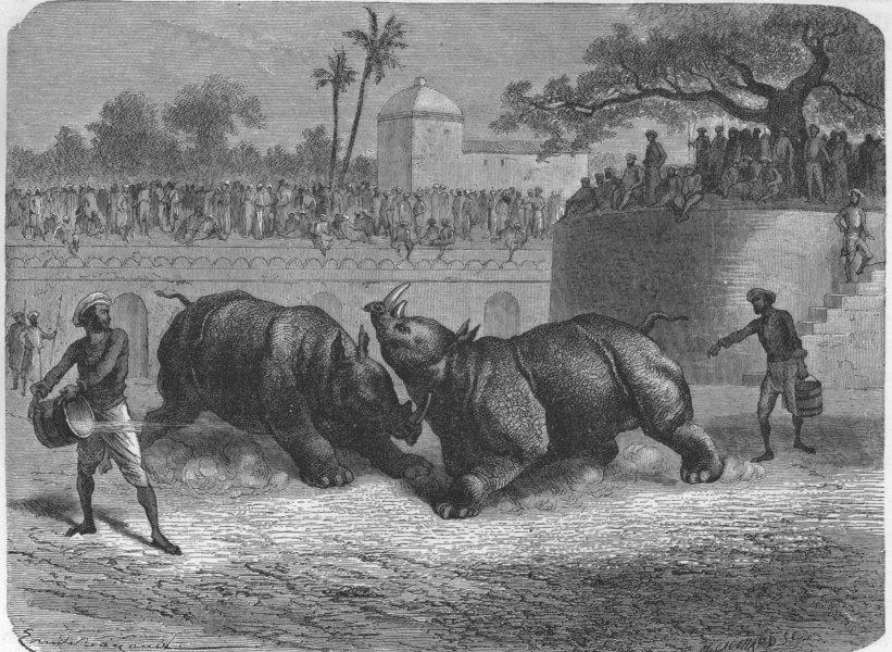 Rhinoceros%2BFight%2Bat%2BBaroda%2B%2528