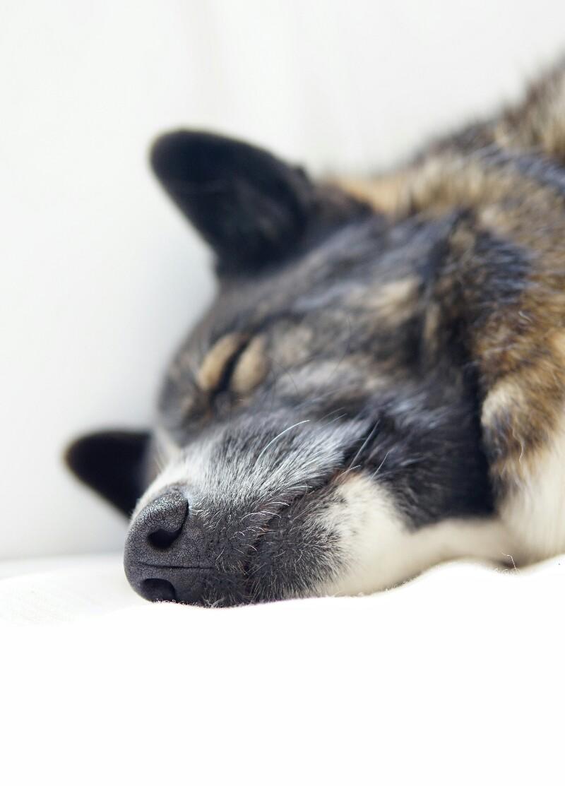 Tarmo-koira, nukkua
