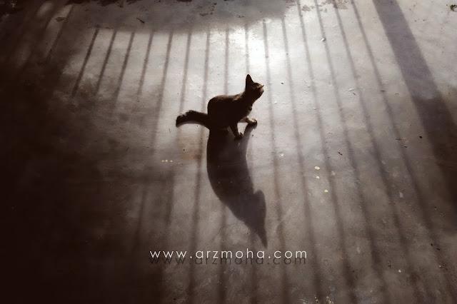 refleksi dalam kehidupan, tanggungjawab seorang anak, tanggungjawab ibubapa kepada anak, perbuatan hari ini refleksi masa hadapan, kata-kata motivasi, gambar cantik kucing, kucing dan bayan-bayang,