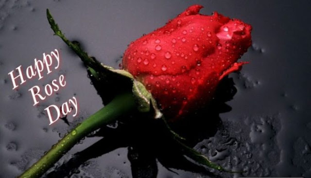 Happy Rose Day Images Wishes