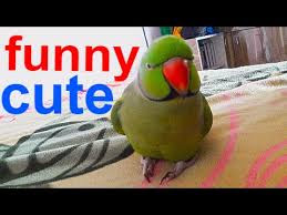 Funny Parrots and Cute Birds Compilation