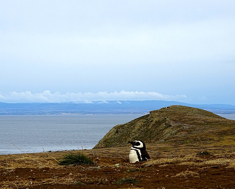 MAGDALENA ISLAND & PENGUINS, CHILE