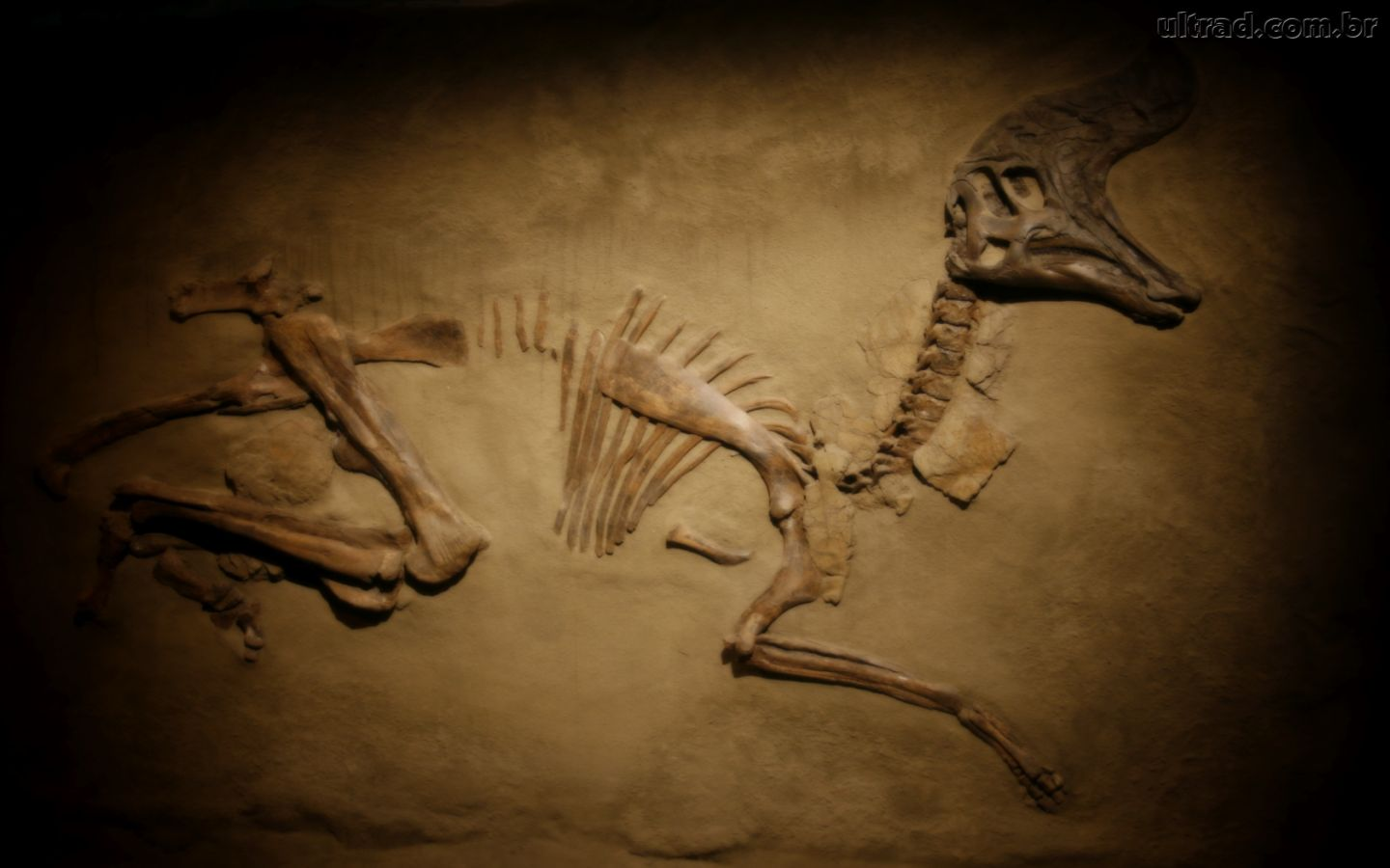 3 types of fossil dating 2