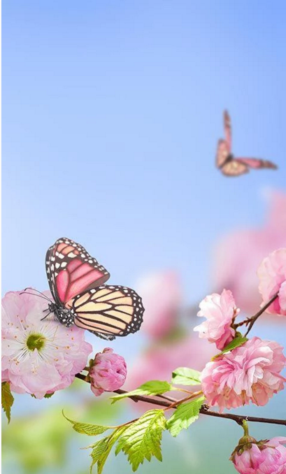 Live wallpaper free spring
