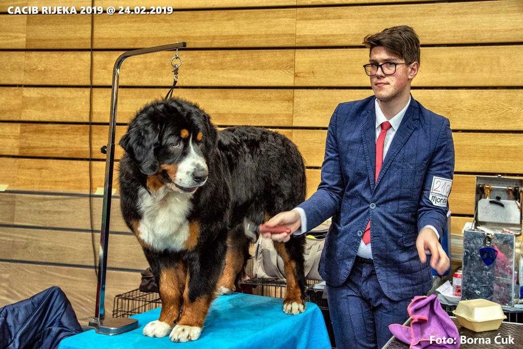 2aed4dd37b CACIB 2019 međunarodna izložba pasa u Rijeci
