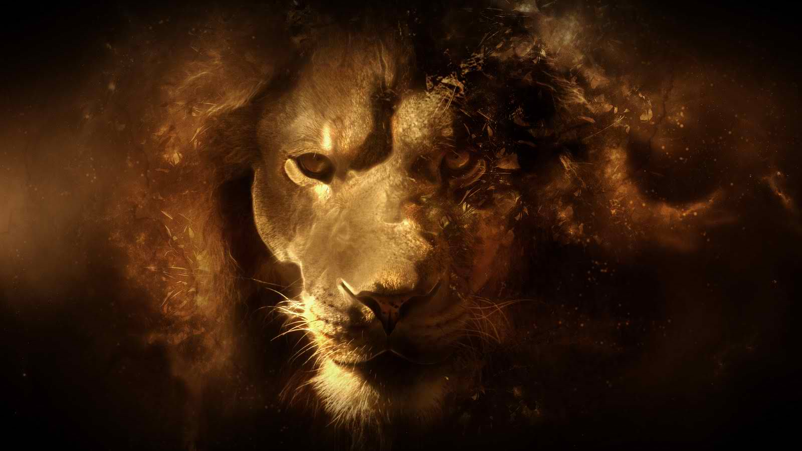 Lion%2BWallpapers%2B2