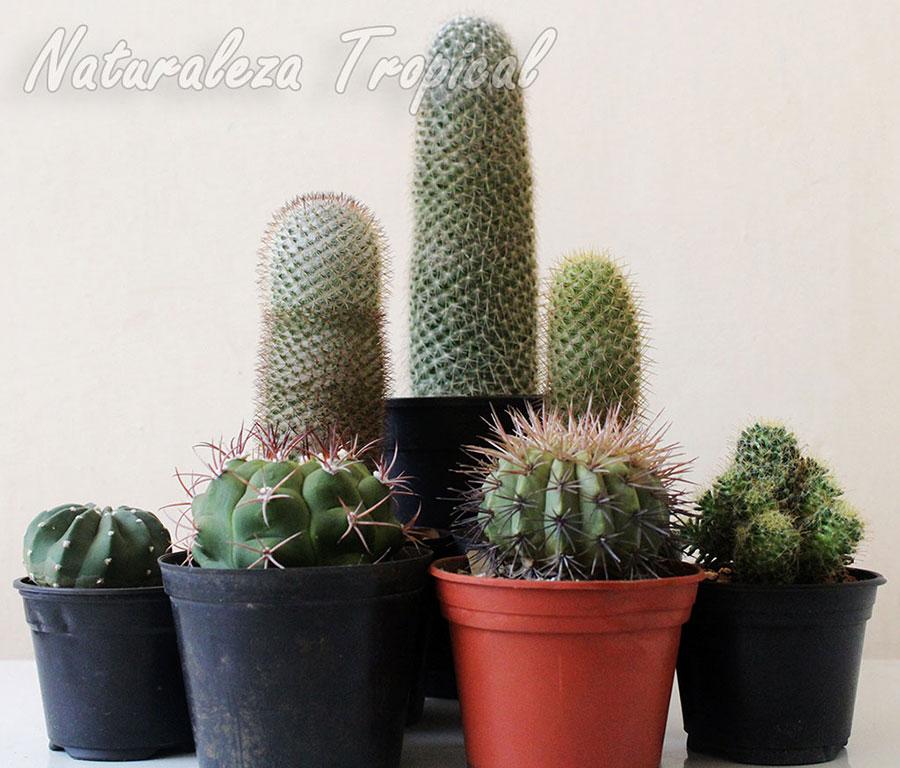 Coleccionismo de cactus, Cactofilia