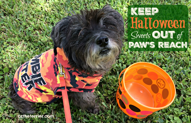 Oz in costume keep halloween sweets out of pet's reach
