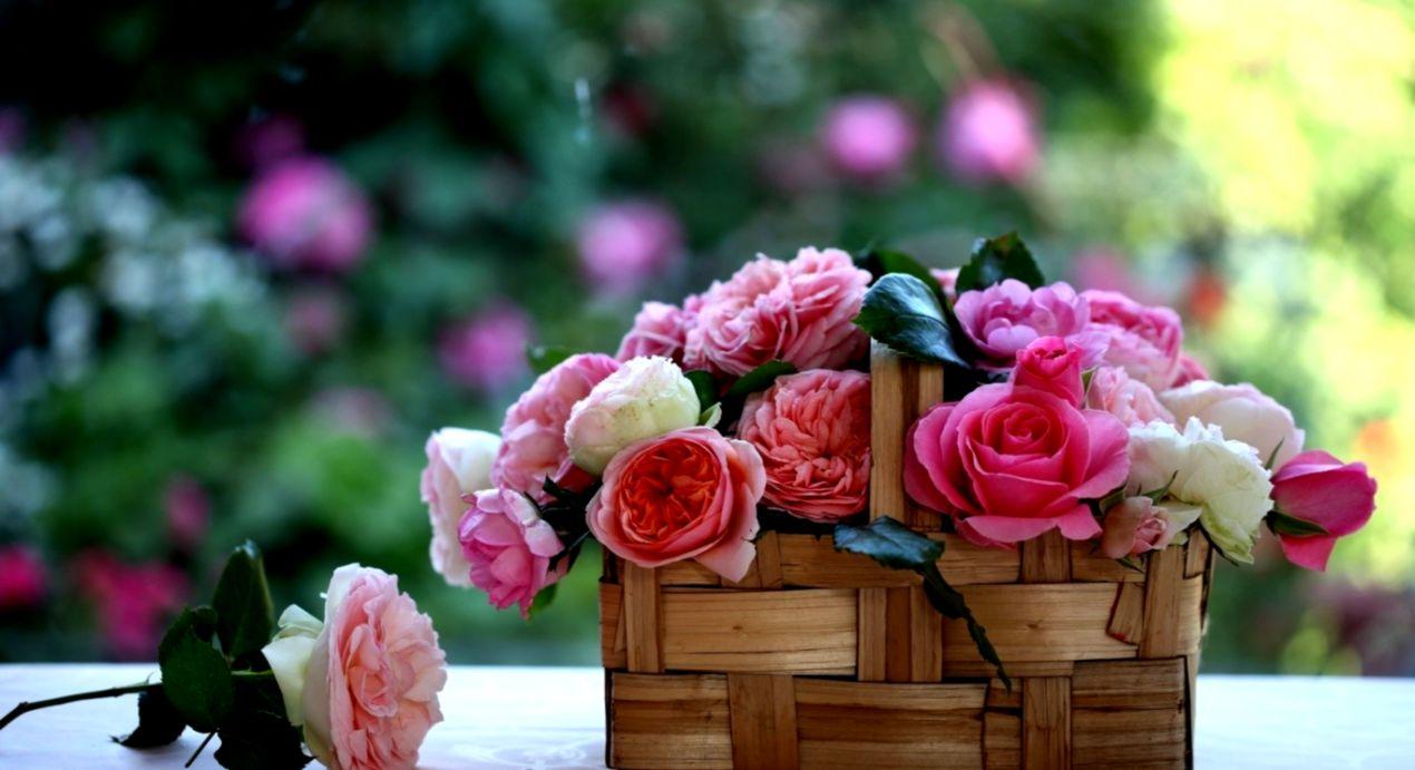 Colorful Flowers Spring Basket Roses Flower Wallpaper Hd For