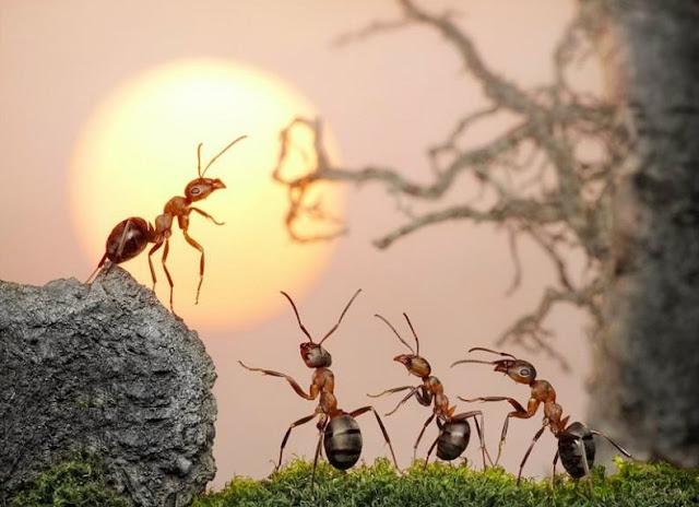 Ilmuan Buktikan Kebenaran Pernyataan Al-Quran Mengenai Semut yang Bisa Berbicara