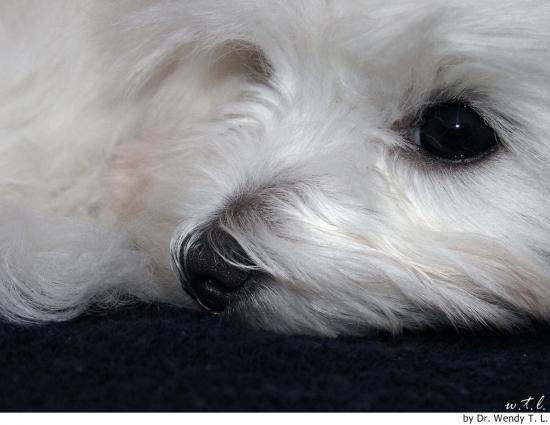 cuidado de los ojos en el perro