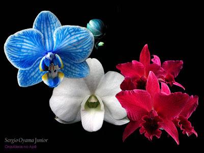 Orquídeas para todos