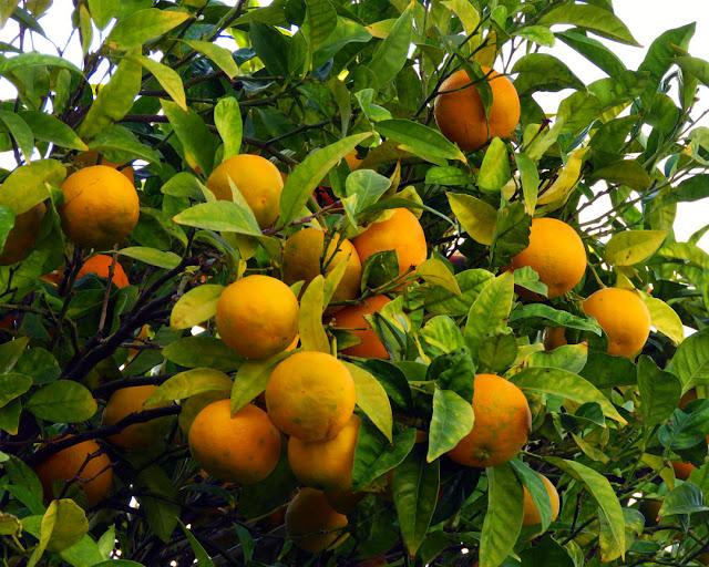 Oranges, Via Borsi, Livorno