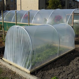 , Garden:  How to Begin Growing Vegetables plus a Chance to Win a Mini Polytunnel