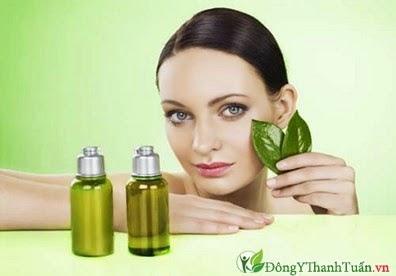 Dùng tinh dầu cây chè chữa viêm họng bằng thuốc nam