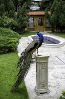 A peacock stands on a stone pedestal in a pleasant garden, with a pond in the background.