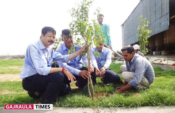जुबिलेंट में पर्यावरण दिवस पर 500 वृक्षों को रोपित किया गया