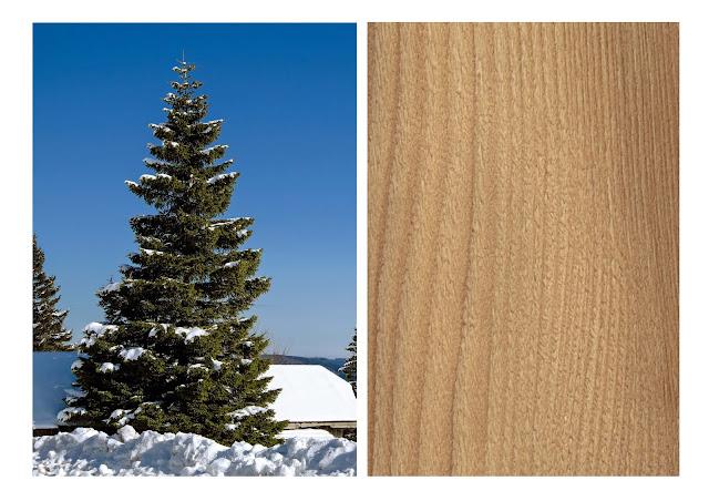 essence fir