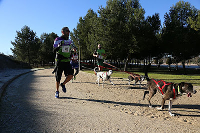 Mushing Canicross Aranjuez