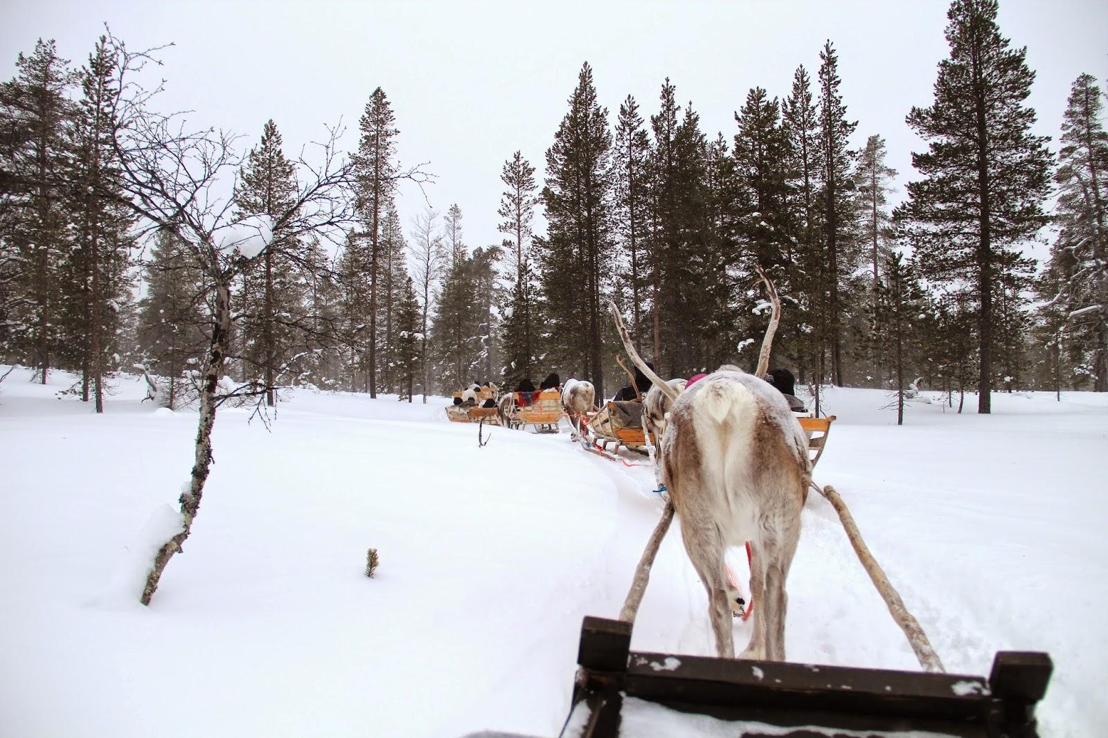 Reindeer Sleigh Finland