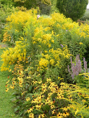Goldenrod and rudbeckia fall blooms at the Toronto Botanical Garden by garden muses-not another Toronto gardening blog