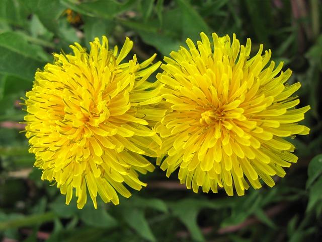 cay hoa bo cong anh 3