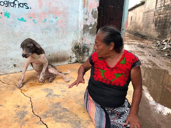 Mujer pide ayuda para su perro que resultó herido tras el sismo