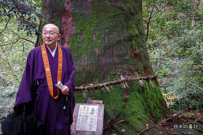 jushoku devant un grand cèdre moussu