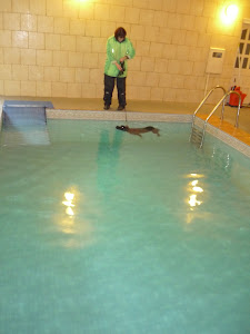 Max swimming at Corley Canine Pool