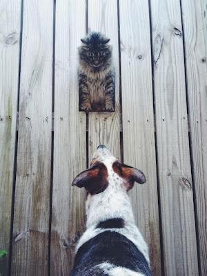 Animales muy simpaticos