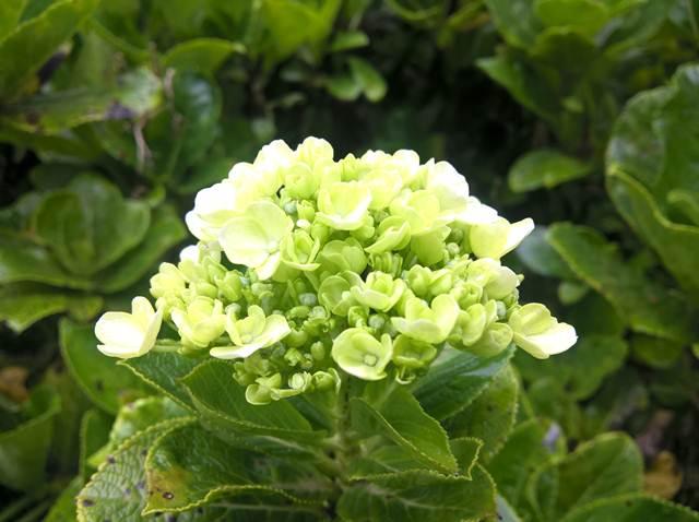 Memotret bunga di Merlimba Garden
