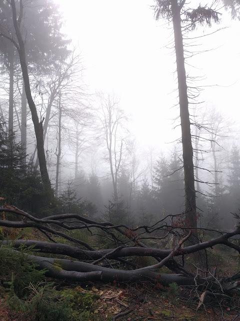 Nebel Egge wald