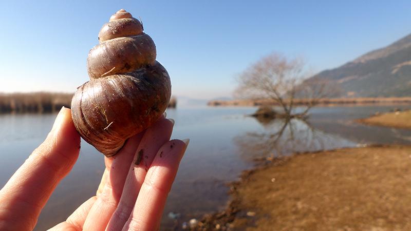 Lac Pamvotis - Ioannina en Grèce - https://terriermigrateur.blogspot.fr/