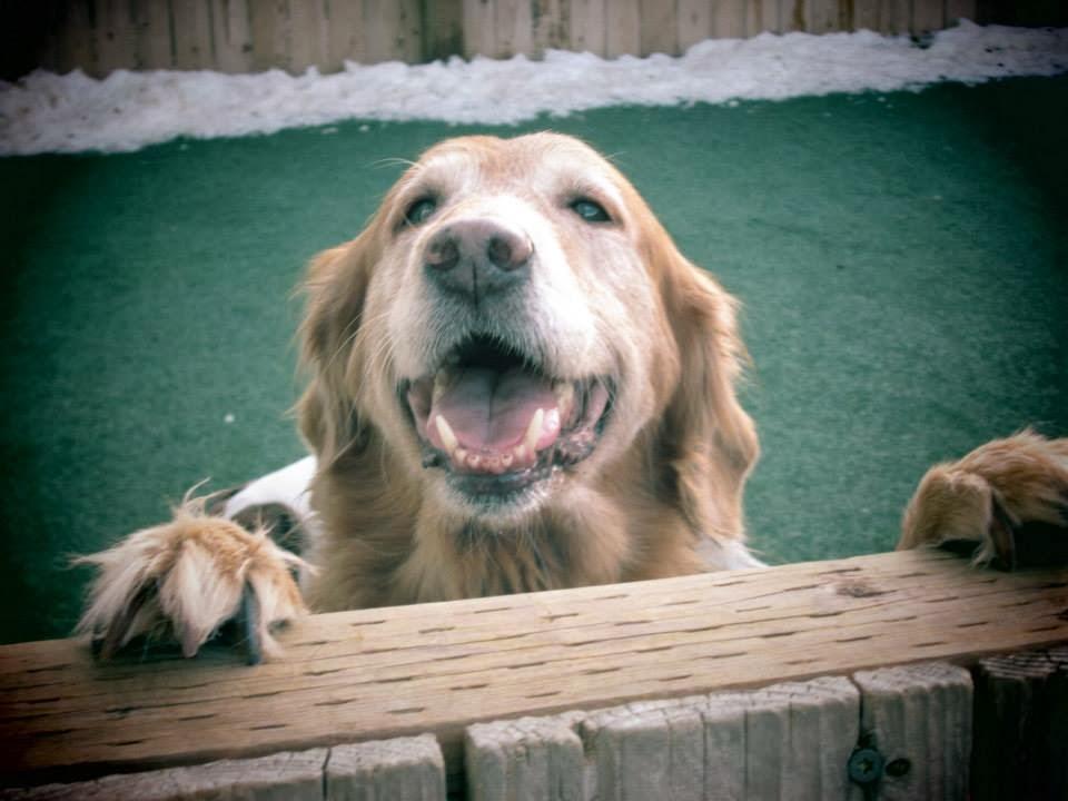 Bark City Dog Daycare