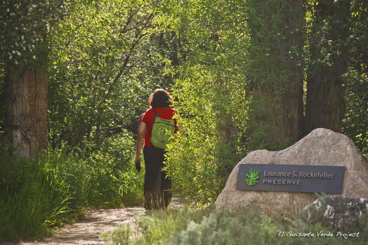 Senderos en Laurance S. Rockefeller Preserve - Grand Teton National Park por El Guisante Verde Project