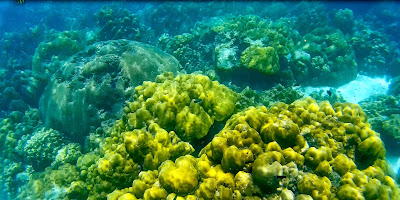 Took a picture of the corals while snorkeling