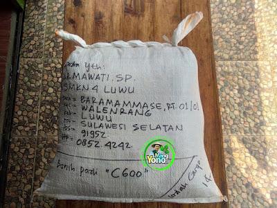 Benih Padi Pesanan  JARMAWATI SP. Luwu, Sulsel  Benih Sesudah di Packing