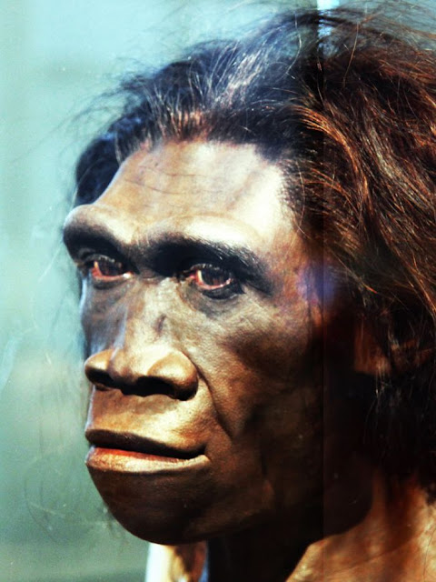Study claims laziness helped lead to extinction of Homo erectus