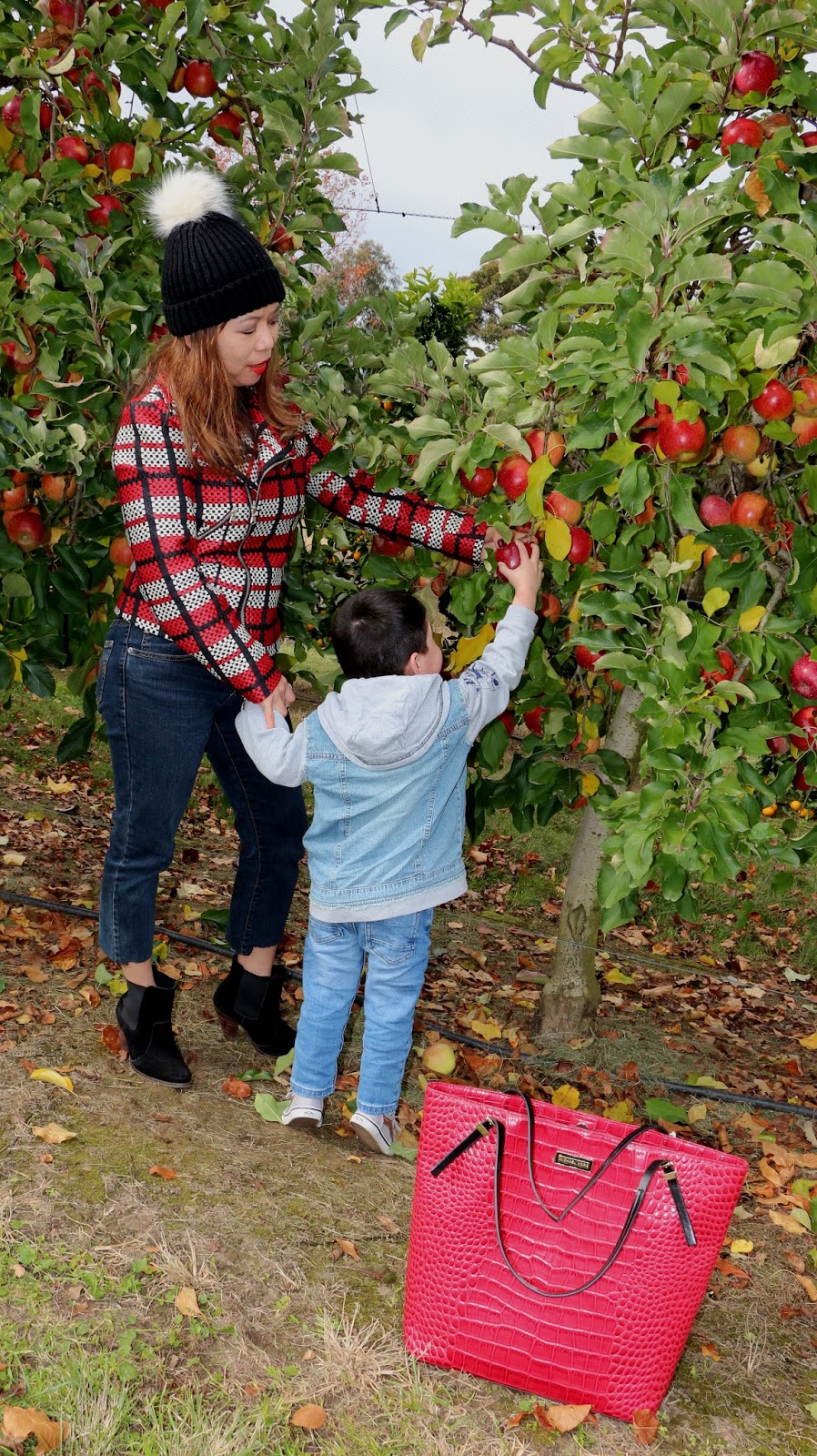 apple picking blog