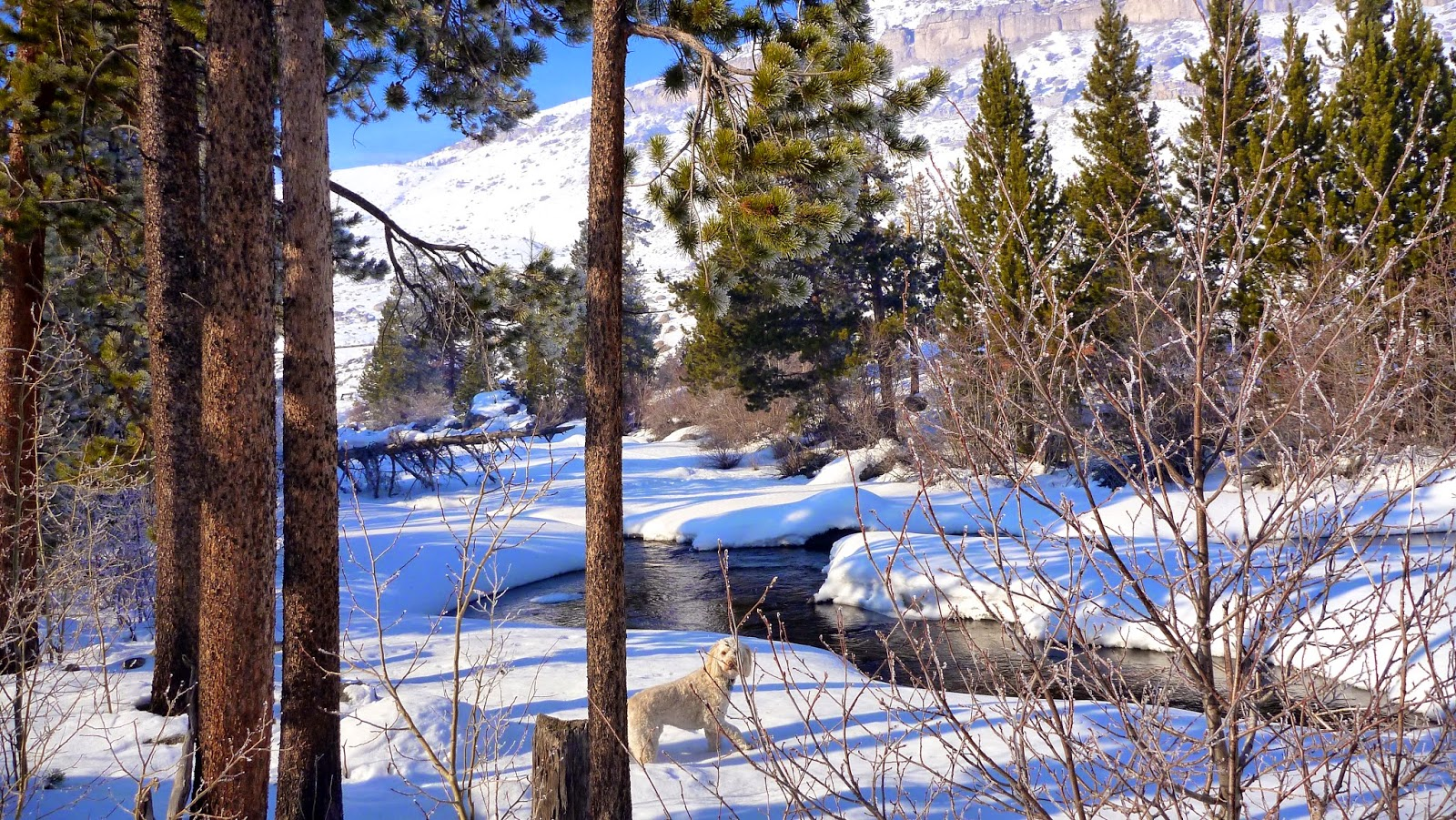 browning base camp: February 2014