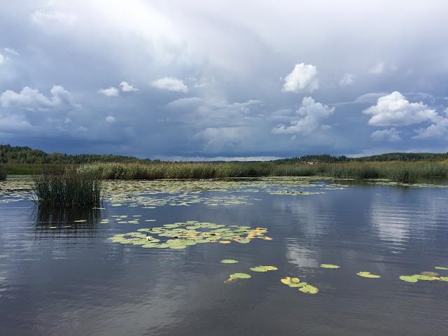 Matala merenlahti, kaislikkoa ja muuta vesikasvillisuutta, dramaattisen mustat pilvet