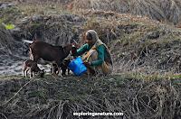 Village at Sundarban National Park