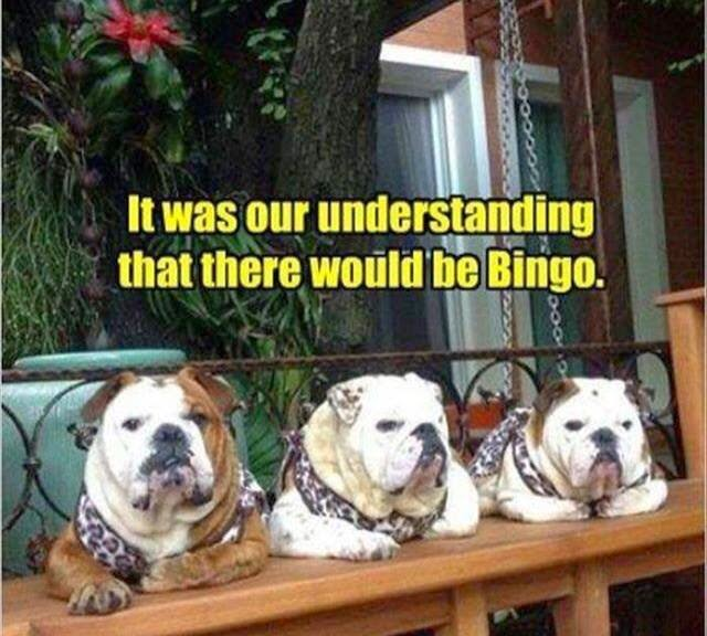 Funny Bingo Bulldogs Joke Picture - It was our understanding that there would be Bingo